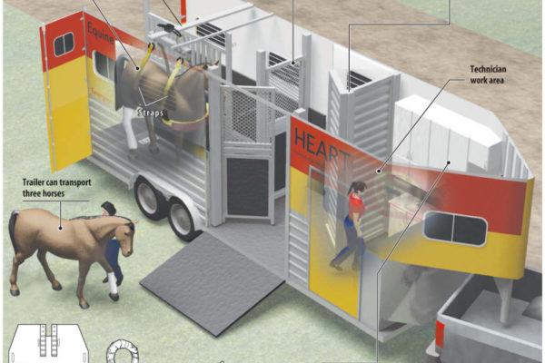 Horse Ambulance infographic