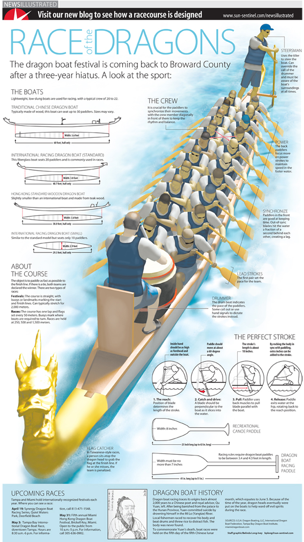 Dragon boat race infographic