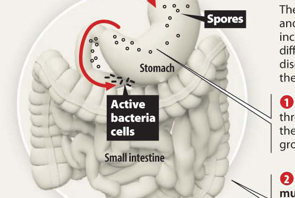 How Bacteria Affects the Body Infographic