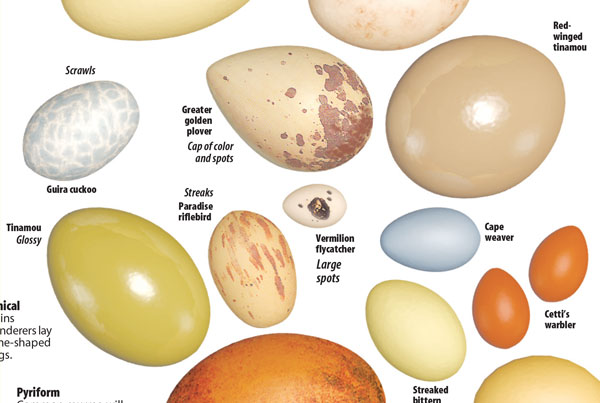 Natural Egg Hues news design