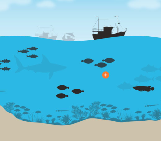 Perils of Overfishing interactive